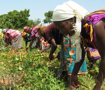 FAO, produzione alimentare a rischio