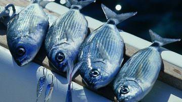 Difendere la pesca dalle illegalità