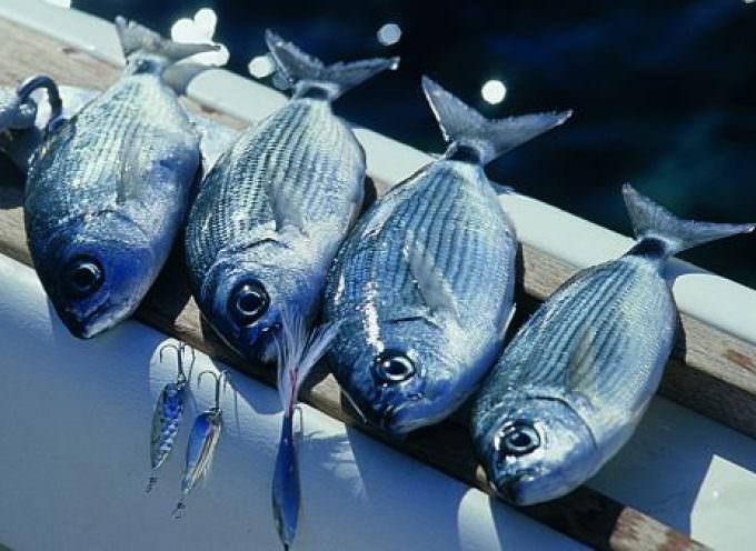 Italia, pesce nostrano alla fine, saranno necessarie importazioni