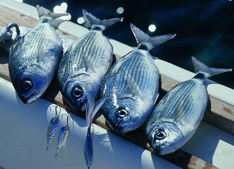 Slow Fish, la riscossa dei poveri