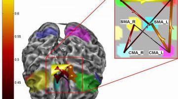 Malattie alimentari: sotto accusa i cannabinoidi del cervello