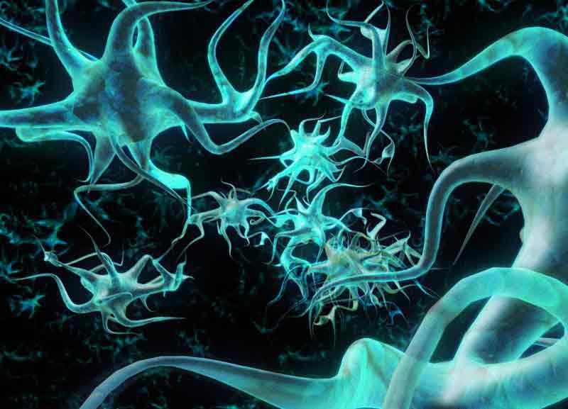"""Nuova scoperta sul """"ricambio"""" dei neuroni"""
