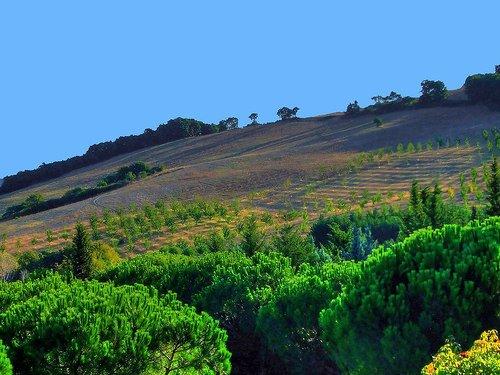 Umbria: Agricoltura – Smaltimento dei rifiuti agricoli e acquisto di compost di qualità a prezzi scontati