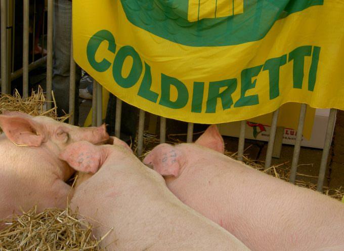 Umbria: Col nuovo Piano Acque la zootecnia rischia il tracollo