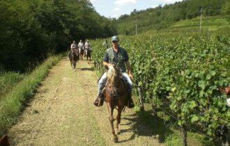 Friuli, una nuova Strada del vino in Riviera?