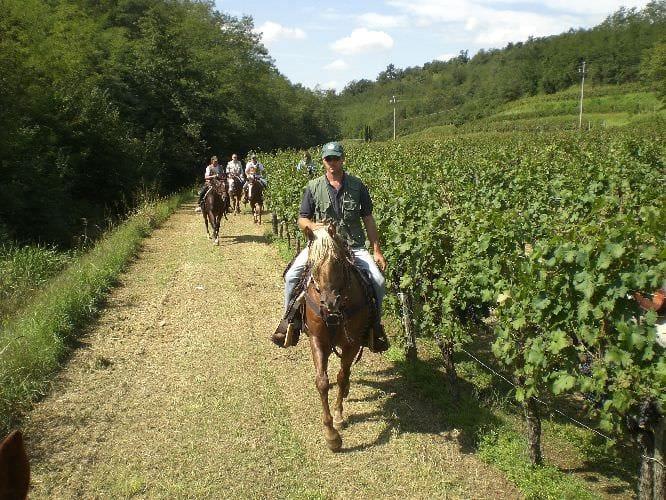 Al galoppo tra le vigne… inseguendo l'amor cortese dell'Azienda Agricola Le Pignole di Brendola (Vicenza)