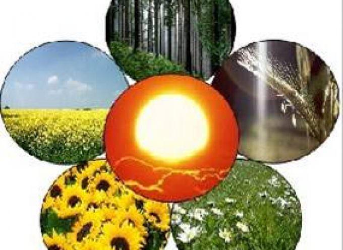 Energia da biomasse: soddisfazione di Confagricoltura per la nuova tariffa omnicomprensiva approvata al Senato