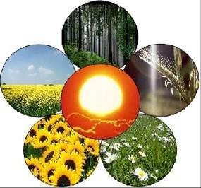 Agricoltura: firmato il decreto per la produzione di ecoenergia