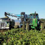 Crisi dello zucchero: No alla privatizzazione delle risorse