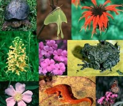 Biodiversità: Plauso alla proposta di una legge di tutela