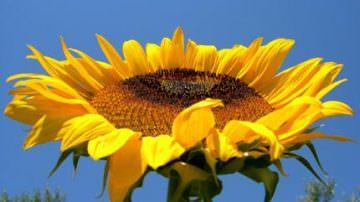 Energia elettrica dalle biomasse: un'occasione persa per l'agricoltura