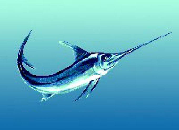 """In Programma a Monopoli """"BiolFish"""" manifestazione dedicata all'acquacoltura biologica e alla pesca sostenibile"""