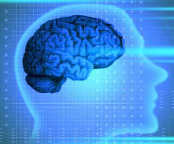 Né, 18, né 21: il cervello matura a 40 anni