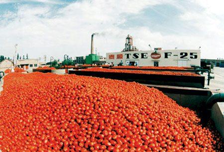 Cibus Tec: Italia sorpassa Cina nella produzione di pomodoro