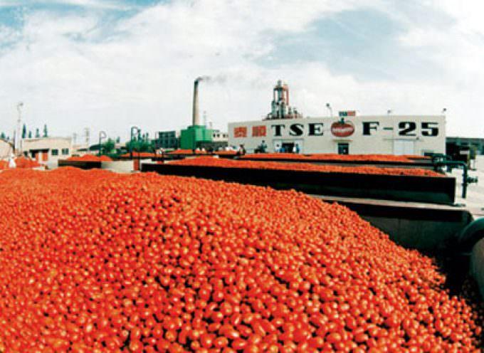 Pomodoro, con il disaccoppiamento totale a rischio occupazione e produzione