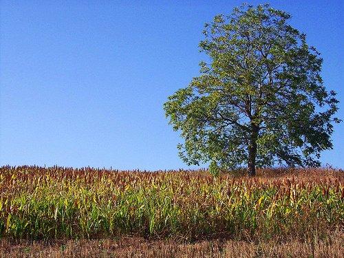 Umbria: Agricoltura – Ritardi nei pagamenti dei premi