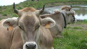 Lanciato nuovo portale sul benessere degli animali
