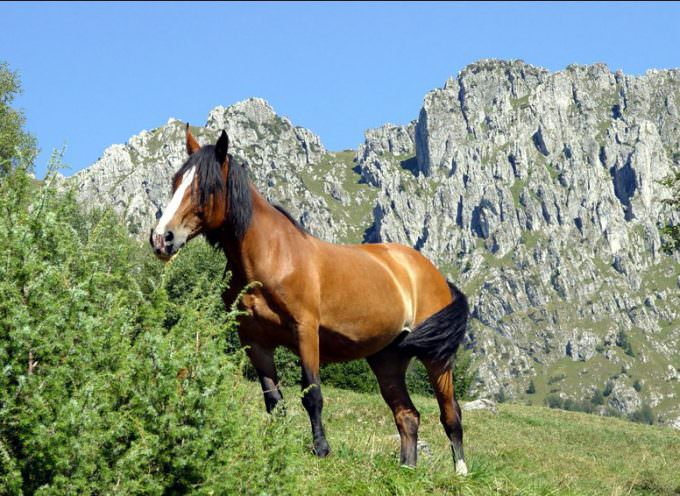 Parchi a cavallo: la nuova campagna di Legambiente per il monitoraggio del territorio e lo sviluppo del turismo sostenibile