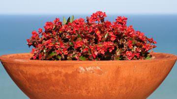 """Caltagirone (CT): Legambiente – """"Compost day: meno rifiuti in città, più qualità in campagna"""""""