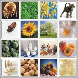 Allergie ed intolleranze, dati e linee-guida