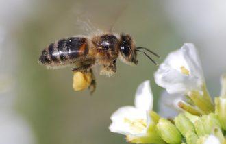 Trentino Alto Adige: Vietati i fitofarmaci dannosi per le api a Bolzano