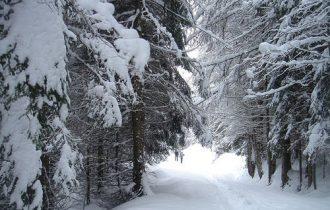 Trieste: Sicurezza in montagna – I sentieri hanno bisogno di essere risistemati e puliti dopo le nevicate invernali