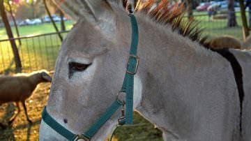 Firenze. Vita e gusto di campagna con Expo Rurale 2012