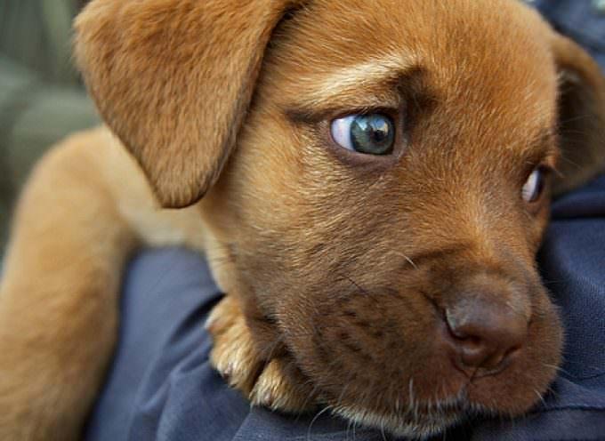 Perché non possiamo mangiare i cani? Hugh Fearnley Whittingstall sfida gli animalisti