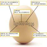 Coldiretti: Le uova italiane sono garantite dall'etichetta