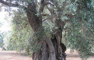 Degustazione di olio d'oliva in Puglia