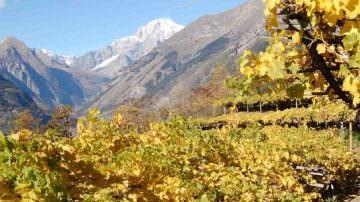 Concorso Vini di Montagna Cervim: 476 le etichette iscritte alla gara