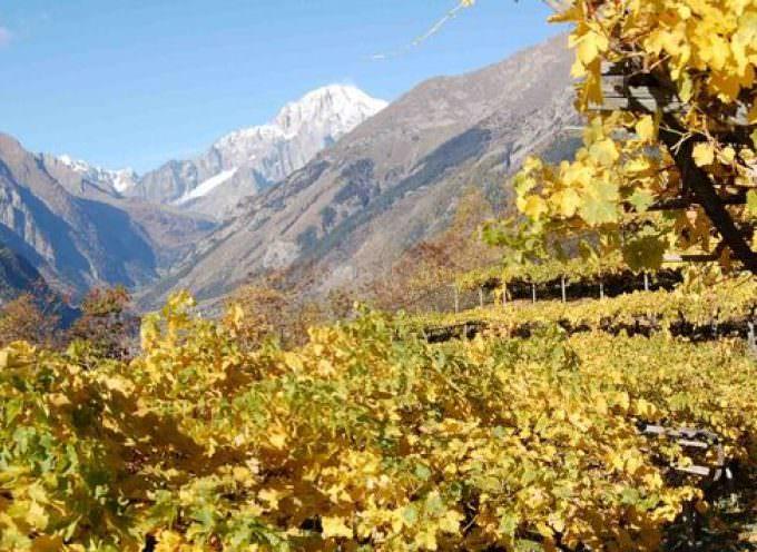 Vinitaly: Provincia di Catania e Cervim presentano il 3° Congresso Internazionale di Viticoltura Eroica