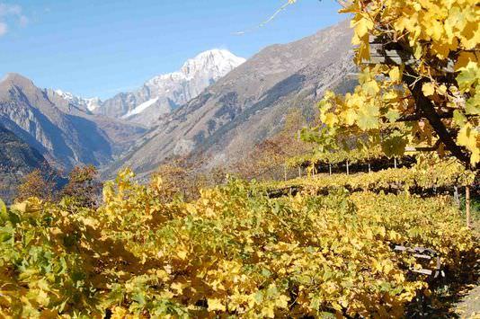 Al via l'organizzazione del 17° Concorso internazionale vini di montagna