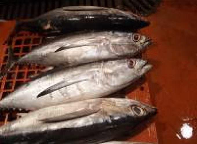 Gravidanza. Pesce, noci e semi per meno allergie alimentari del bambino