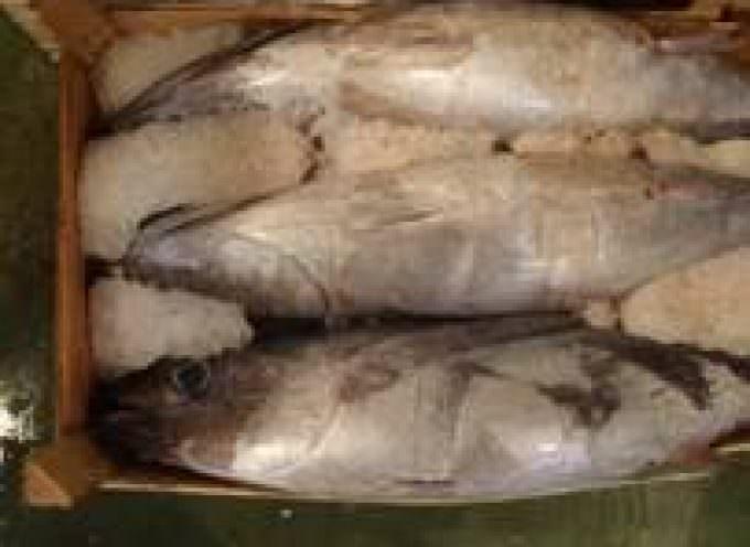 Pesce: se contaminato da mercurio fa male ai bambini