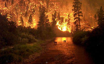 Incendi: Coldiretti, in calo del 33% nell'ultimo decennio