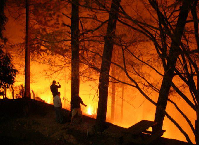 Incendi estivi: 50 mila volontari nei boschi