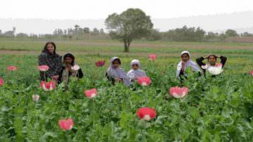 Un taglio alla radice. La nuova strategia Usa contro l' oppio afghano