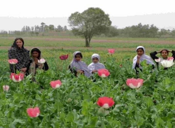 Afghanistan: Il granoturco miete più vittime tra le truppe britanniche che l'oppio