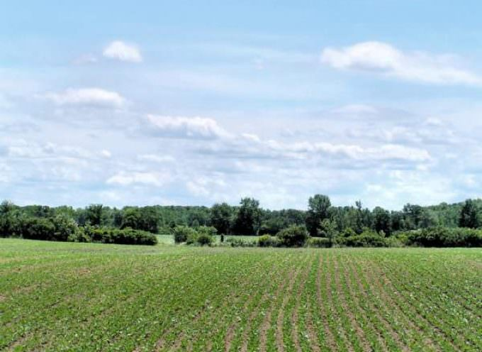 Agricoltura: Per uscire dalla crisi occore studiare nuove norme