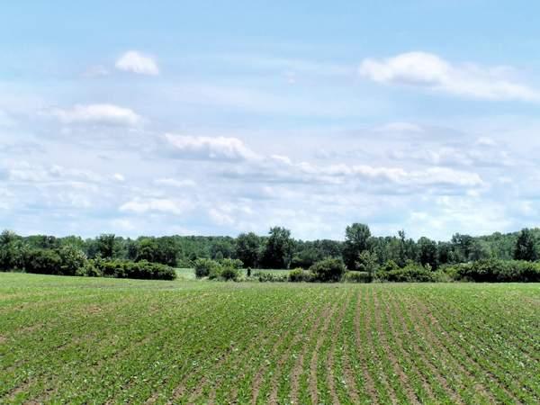 L'Unione Europea cambia, meno biocarburanti più cibo