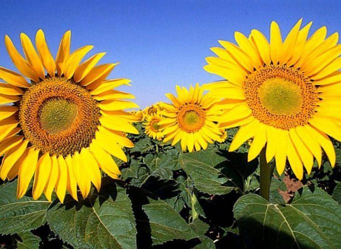 Agroenergie: Confagricoltura, due risultati importanti per incentivare nuovi investimenti