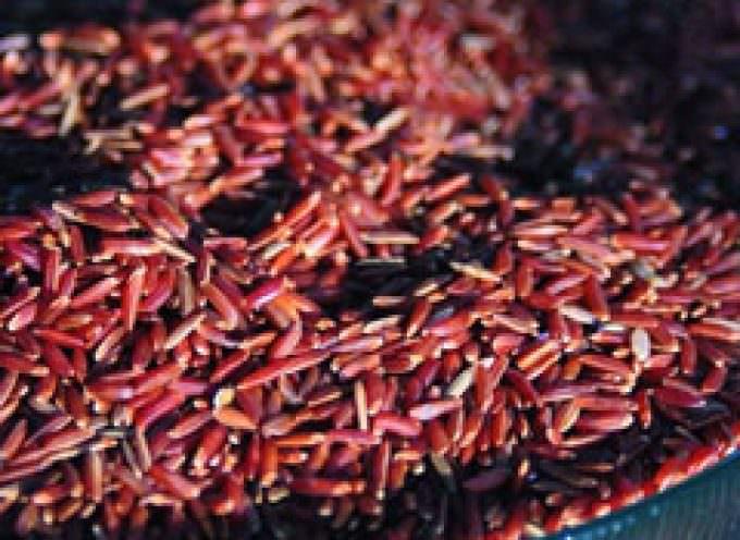 I medici imperiali contro il colesterolo: ecco il lievito di riso rosso