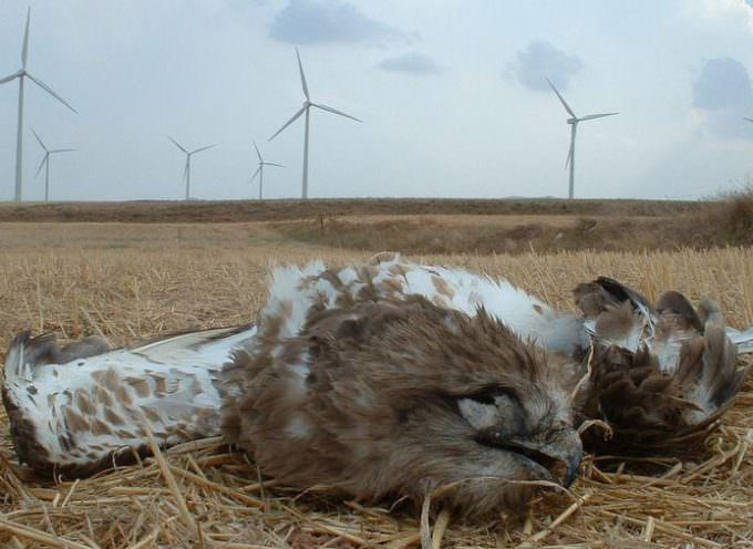 Ambiente, Coldiretti: la speculazione dell'eolico fa strage di aquile