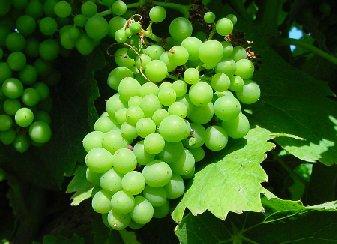 """La viticoltura sostenibile non solo come difesa dell'ambiente, ma anche come """"stile"""" ritrovato per grandi vini nel segno della tradizione"""