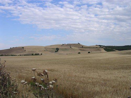 Agricoltura, le richieste della Regione Basilicata al Ministero