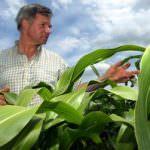 """UE, nuove regole per l'agricoltura. Le associazioni: """"Un regalo per gli OGM"""""""