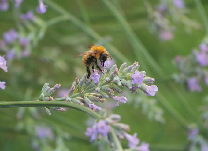 Honey traveller, alla scoperta delle diverse qualità di miele d'Italia