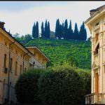 """Unesco: Le colline del Prosecco candidate """"Patrimonio dell'Umanità"""""""