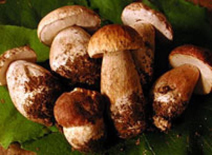 Maltempo: Coldiretti, boom funghi con pioggia record di settembre